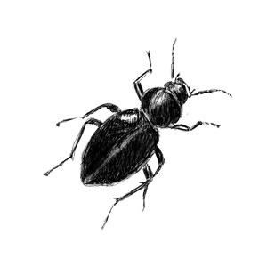 sgh_beetle-300x300