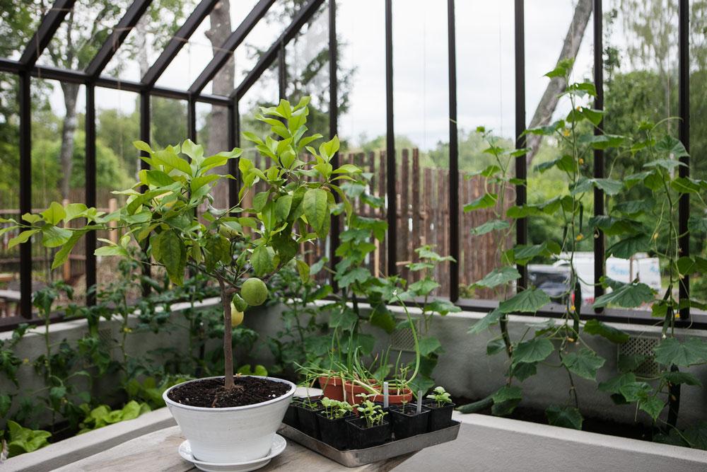 Upphöjd bädd i växthuset hemma hos trädgårdsdesignern Marika Delin