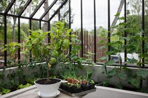 Upphöjd bädd i växthuset hemma hos trädgårdsdesignern Marika Delin och Calle Forsberg