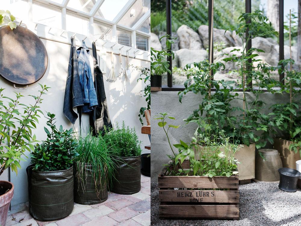 Ordning och reda i växthuset med rensopade golv och fint organiserade kukodlingar