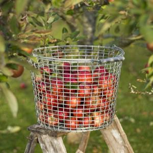 bucket_24_ingrid_marie_apples