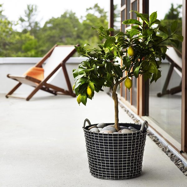 classic-24-planting-bag-lemon-tree-square