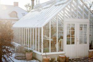 Växthus i blek novembersol och motljus