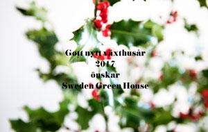 Järnek med gott-nytt-år-hälsning från Sweden Green House