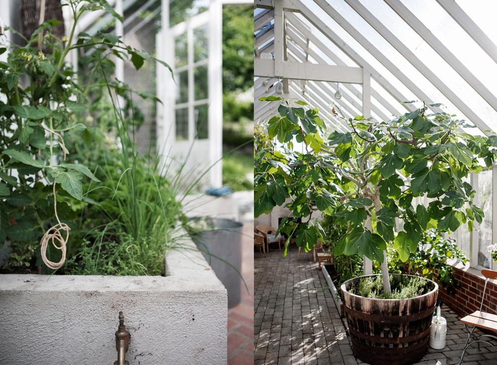 Odlingsbäddar för växthus, en hög gjuten i betong och en låg enkel i trä