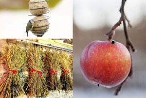 Kollage med tre bilder på sakerna kan göra för att ge fåglarna mat till jul. Från vänster till höger är det taljboll, äpple och julkärve.