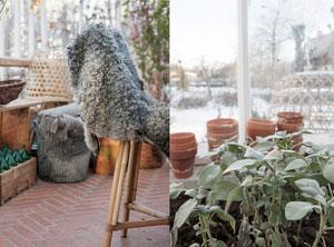 Växthusinteriör med möbler i rottin,g, antika möbler, trälådor och metallkorgar. Upphöjda bäddar med salvia och lerkrukor