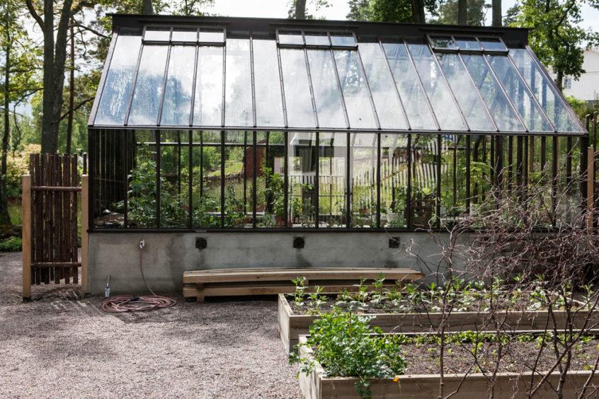 Brunmålat växthus i trä tillverkat av Sweden Green House, sadeltak.