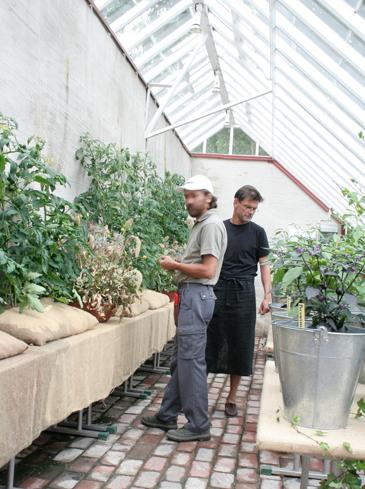 Två män stor och odlar i ett växthus