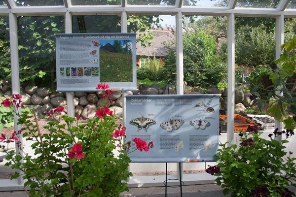 Skyltar och blommor i ett växthus