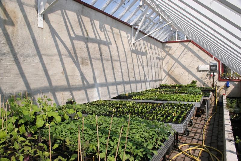 Odlingsbäddar i ett arkitektritat växthus