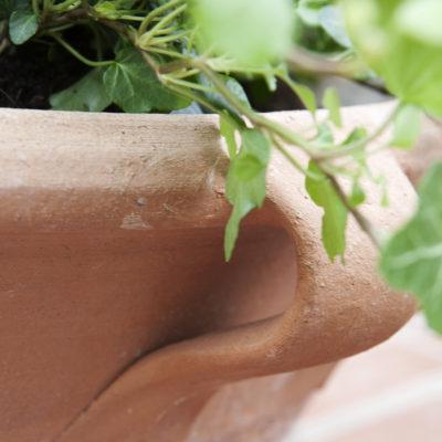 Medelhavskruka fat med murgröna till fyrkant