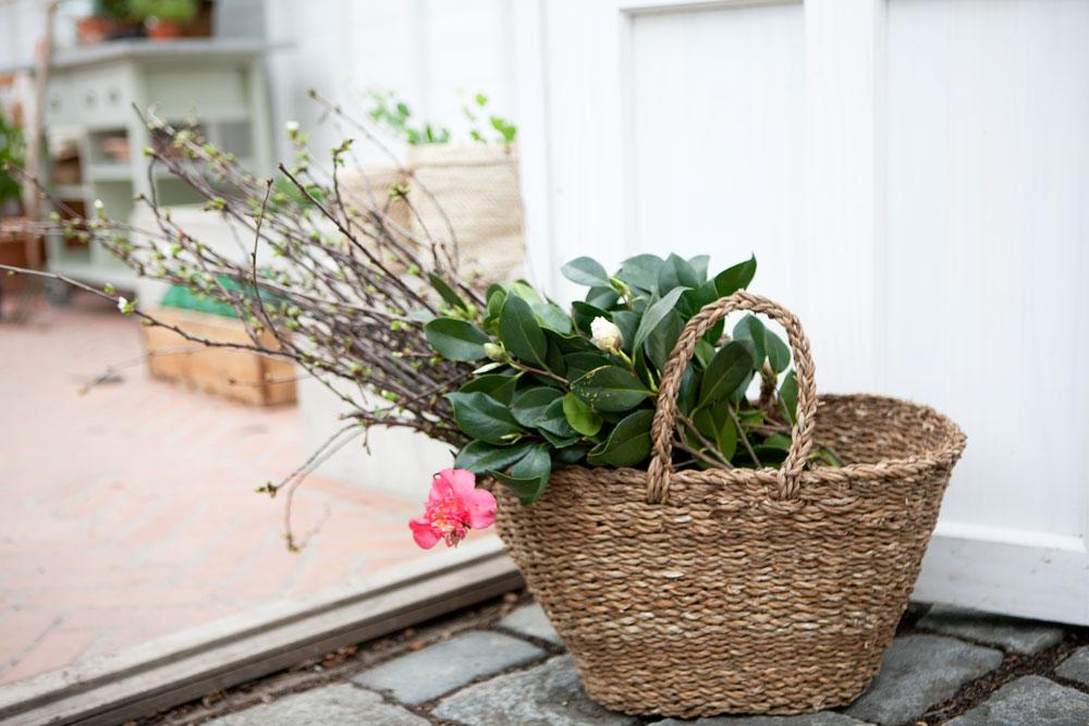 En korgväska från Red Q står i dörren till växthuset. den är fylld med kvistar av körsbär och kamelia.