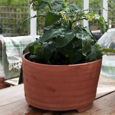 Handdrejad kruka framtagen av Sweden Green House lagom stor att rymma en tomatplanta
