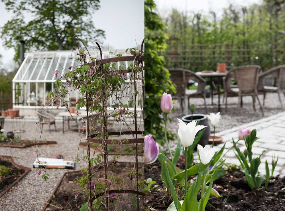 Dubbel bild från framsidan med rabatterna och klematis som klättrar upp mot den stålspaljé. Den andra bilden är från sida av växthuset där det finna rabatter med tulpaner i blom just nu.