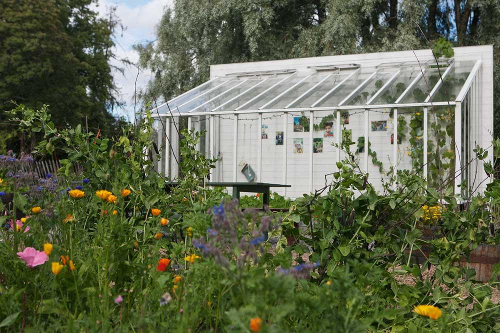 Framför växthuset på Rosendalsträdgård växer en mängd ätbara blommor