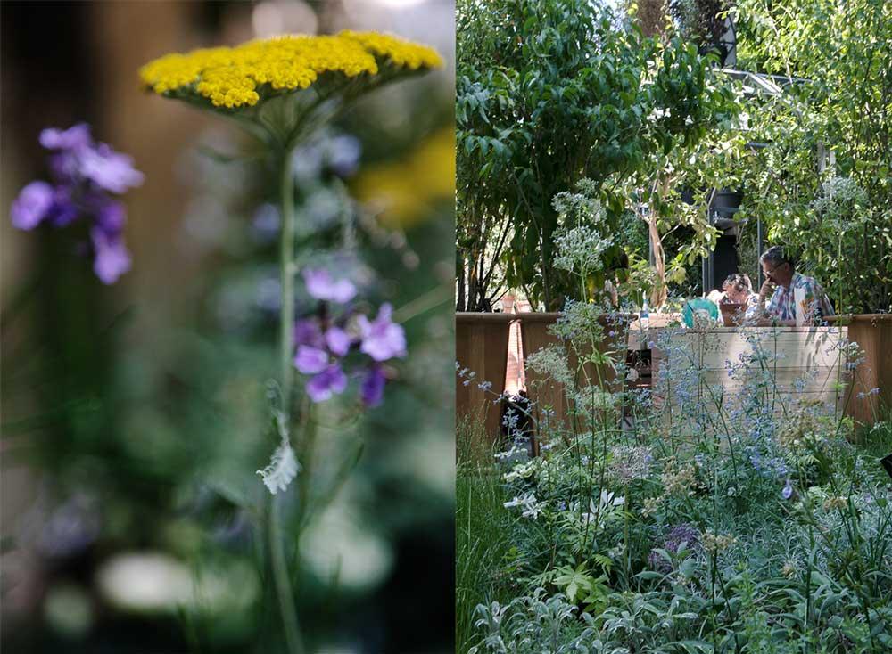 Renfana, blomstersalvia och kryddväxter fanns med i Gally´s visningsträdgård på den franka mässan jJardins jardin