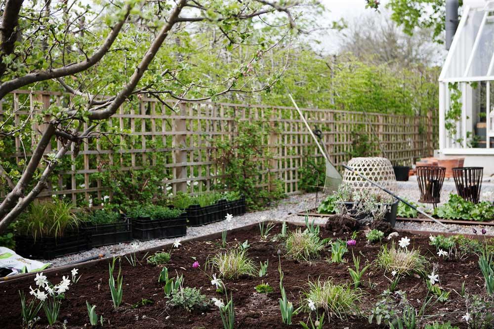 Rabatterna framför växthuset får nya har fått nya plantor