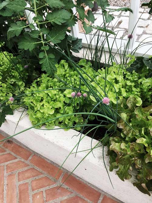 I de upphöjda bäddarna i vår visningsväxthus i Nacka växer det så det knakar.