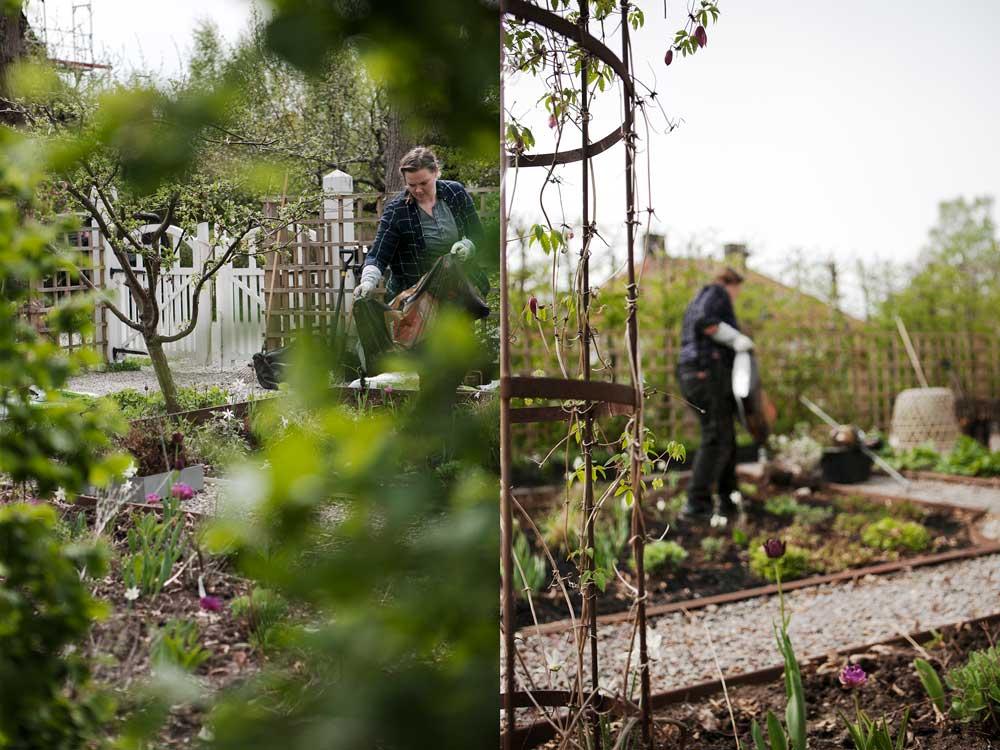 Dubbel bild från trädgården i nacka när vi planterar nya växter i rabatterna