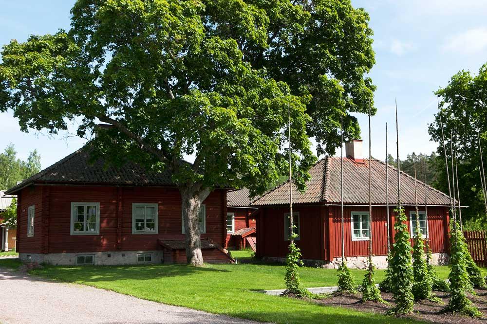 Den faluröda bergmansgården med sina humlestörar i förgrunden. Gården är en av de mest välbevarade i Kopparberg och del av världsarvet Falun.