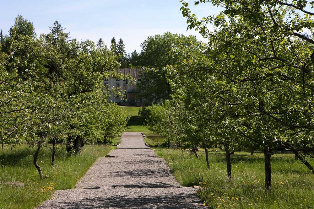 Det finns cirka 70 gammeldags frukträd utspridda på terrasserna framför gården.