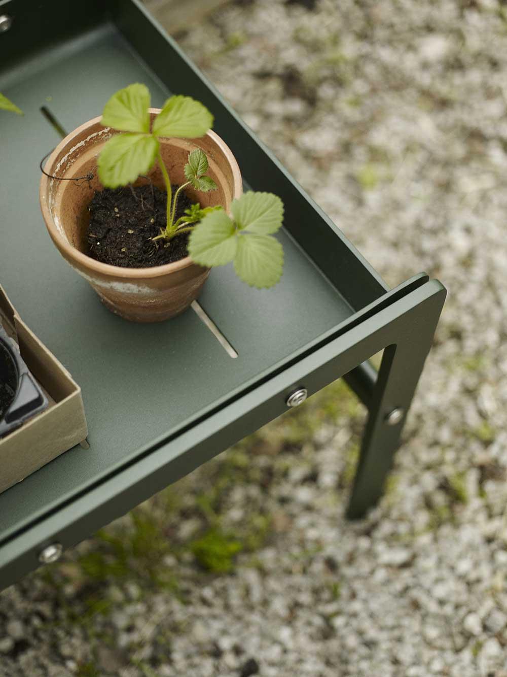 Grön metallbänk med smultronplanta.