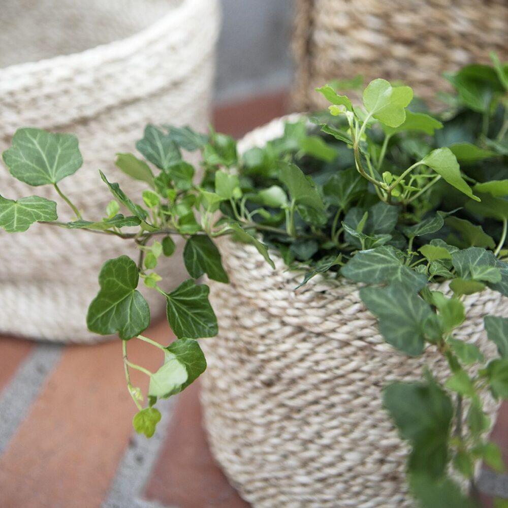 Små korgar av olika slag är användbart för förvaring av växthusets alla småprylar.
