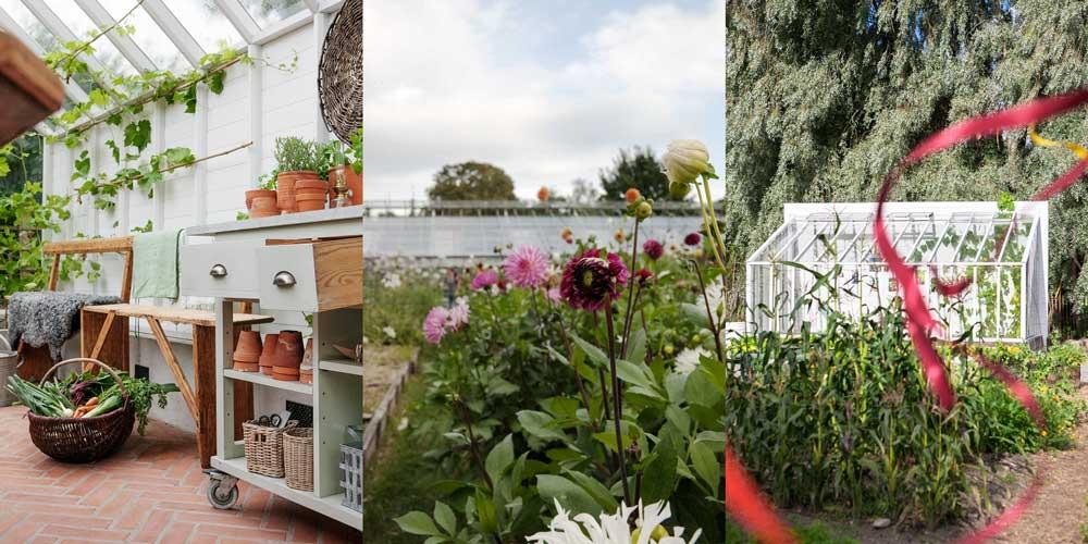 Trevlig helg önskar Sweden Green House med tre bilder, en från visningsväxthuset i Nacka, en från dahliarbatten på Rosendalsträdgård och en på växthuset med pulpettak från Rosendal.