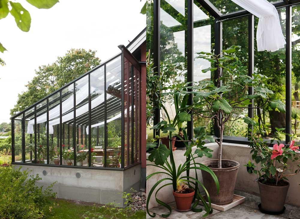 Olbys i Älvsjö önskade ett växthus i engelsk stil och vände sig till Sweden Green House för att de tyckte växthusen som de bygger kändes gedigna. och lite som ett orangeri.