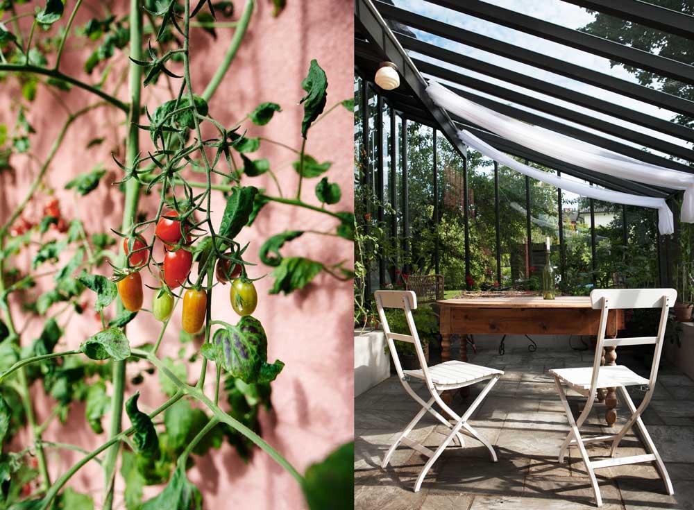 Skuggardiner skyddar mot den värsta solen i träväxthuet och växterna verkar trivas eftersom Olbys redan kunnat skörda tomater fast odlingssäsongen varit kort.