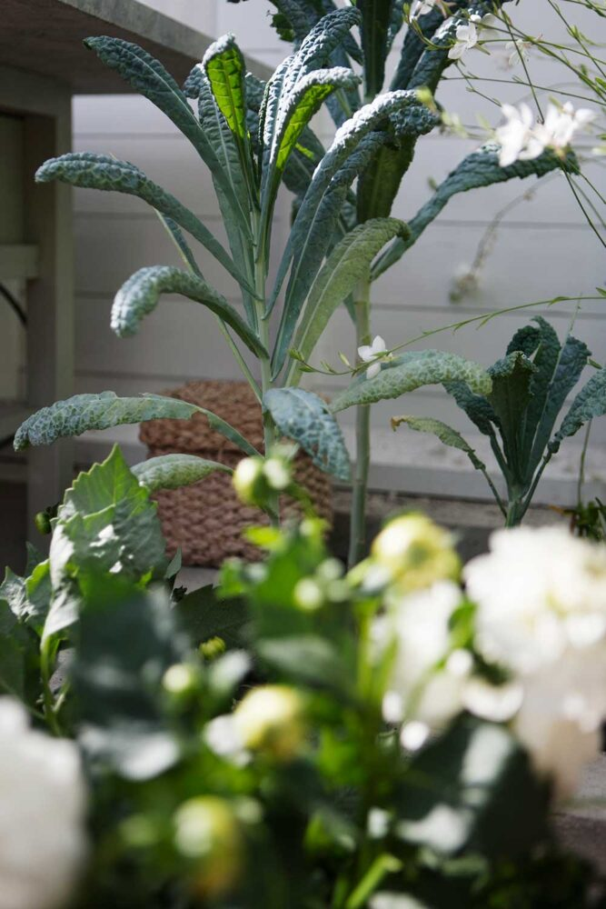En växtkombination som vi gillar just nu är vit dahlia och grön kål.