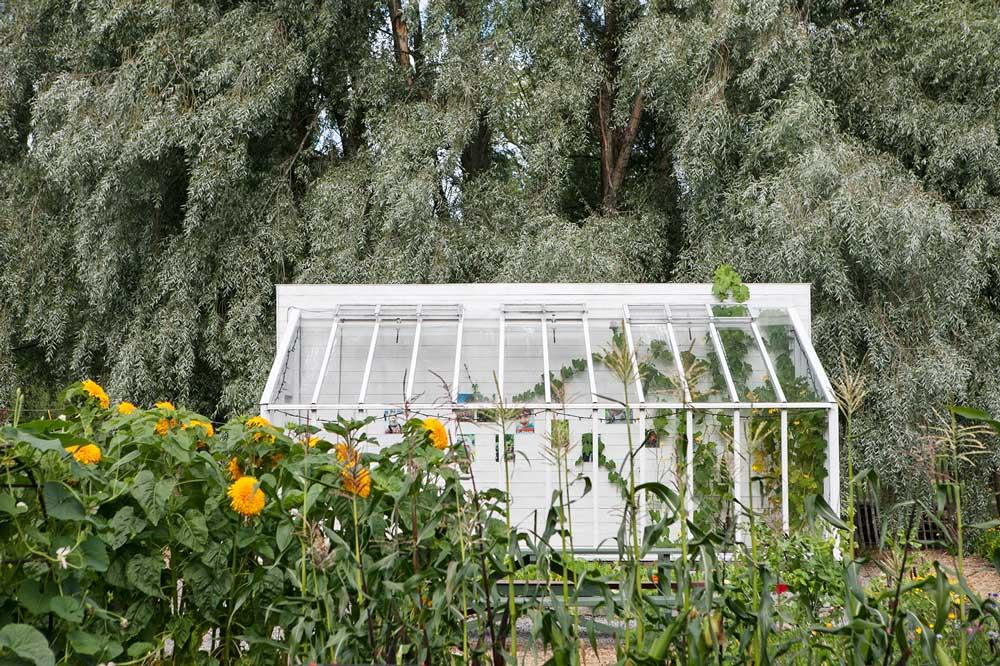 Träväxthuset med pulpettak som vi byggt på Rosendals trädgård. De har bilhäcken som bakgrund och solrosor i förgrunden.