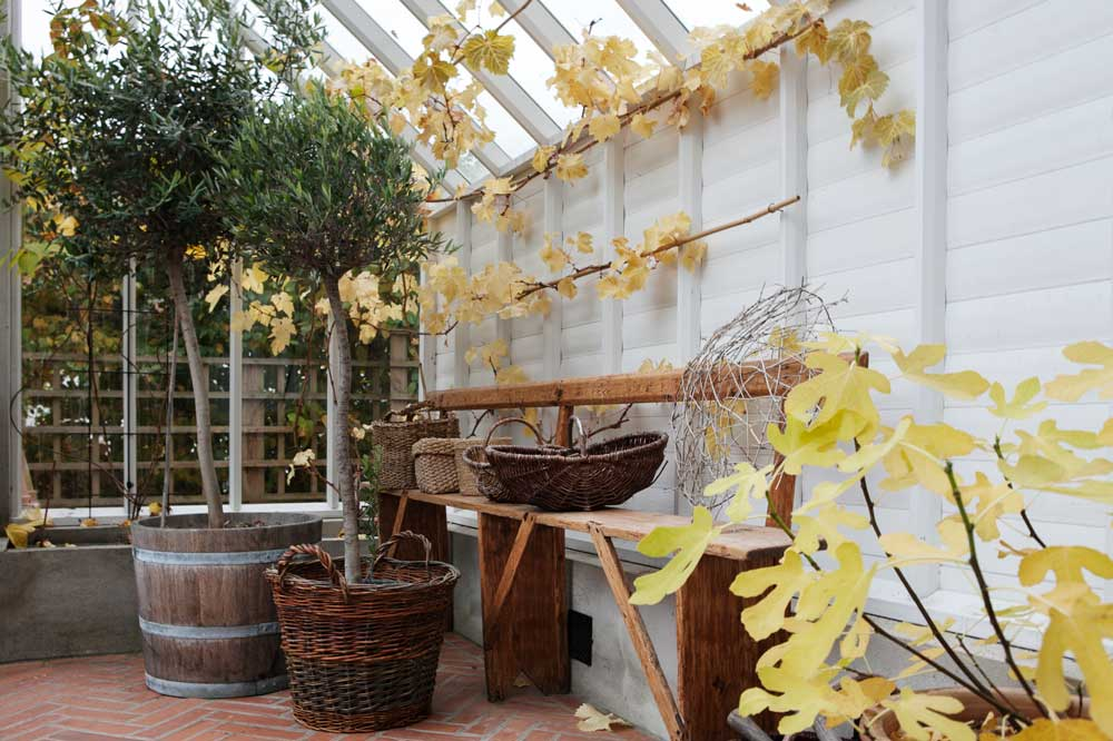 Korgen från Hjärta till hjärta är här fylld med ett olivträd placerad tillsammans med andra orangeriväxter i växthuset.