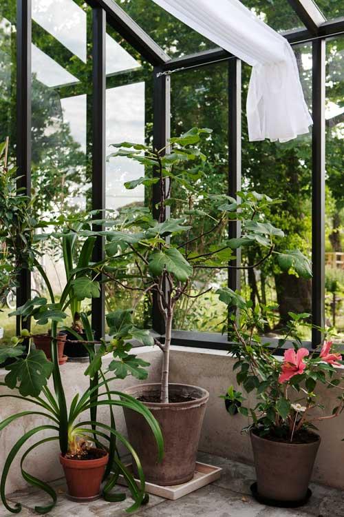 Odlingar i växthuset