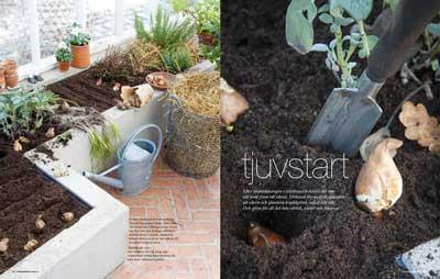 I det senaste numret av tidningen Trädgårdsliv, i ett reportage om att kickstarta odlingarna, är vårt växthus med.
