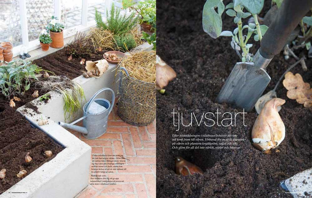 I ett reportage i senaste numret av ridningen trädgårdsliv är vårt växthus i Nacka med.