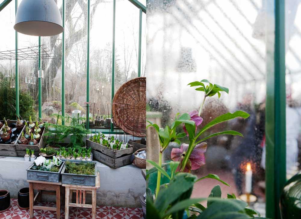 Hos Familjen Grön utanför Uppsala kan man då och då köpa växter och trädgårdstillbehör och verksamheten bedrivs delvis i ett av våra växthus.