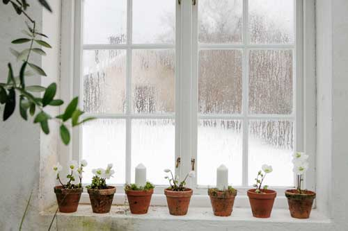 Julrosor i terrakottakruka på rad i ett växthusfönster, varvat med tjocka blockljus.