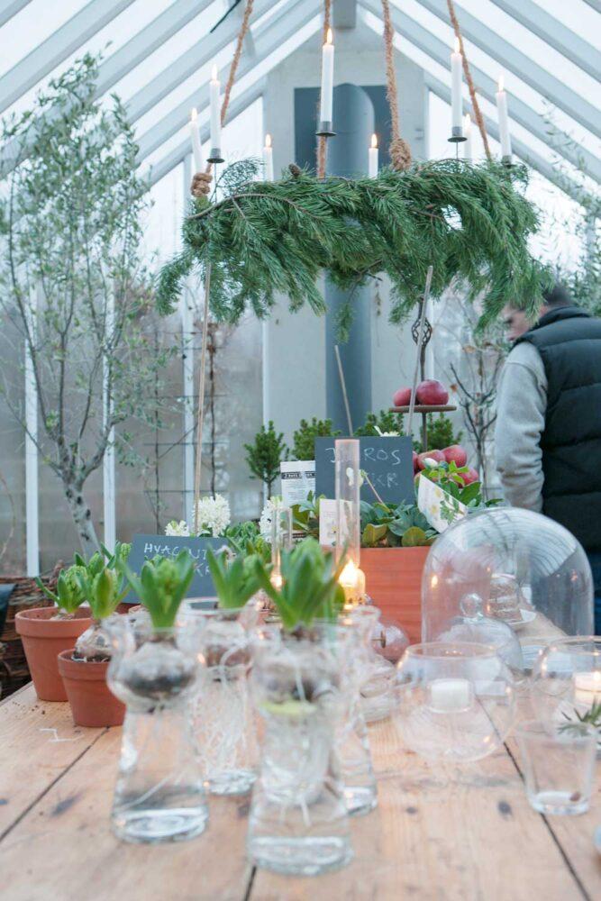 En järnkrona med tända ljus över bordet i växthuset.