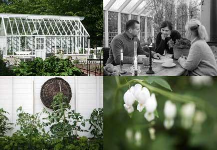 växthus, jordbäddar, swedengreenhouse medarbetare och en kvist med vit löjtnantshjärta i i fyra bilder som sitter tillsammans.