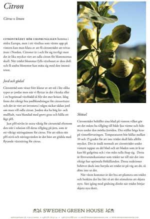 Om du har äger ett växthus ska du passa på att odla citroner.