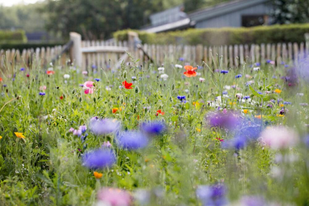 Blomserfältet på Rosendals trädgård på Djurgården i Stockholm