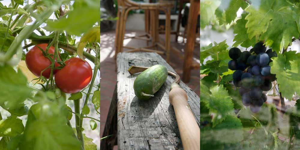 Årets skörd av tomat, gurka och vin är mindre än normalt.