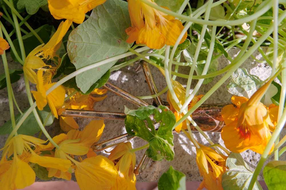 Krassetrassel och kopparverktyg i växthusets upphöjda jordbäddar.