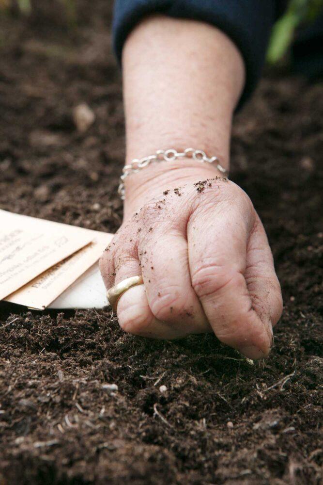 Evas hand som lägger från i växthusets upphöjda jordbädd.