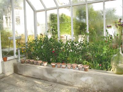 odlingsbädd i växthus