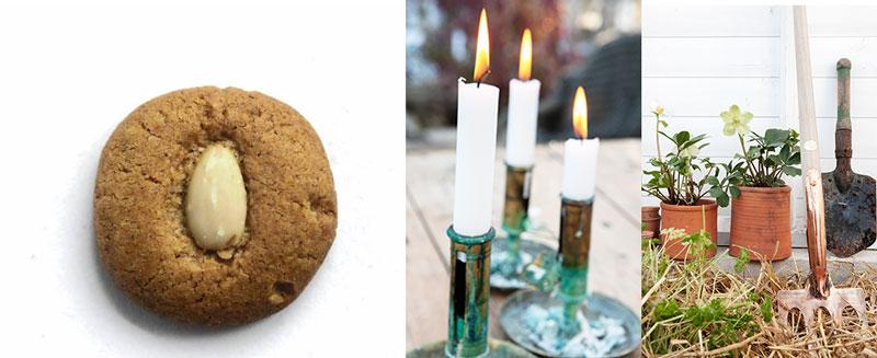 Pepparnötter, ljus och julrosor skapar stämning på säsongens fester i växthuset.