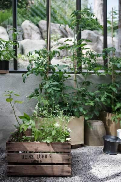Odling i olika krukor i ett växthus