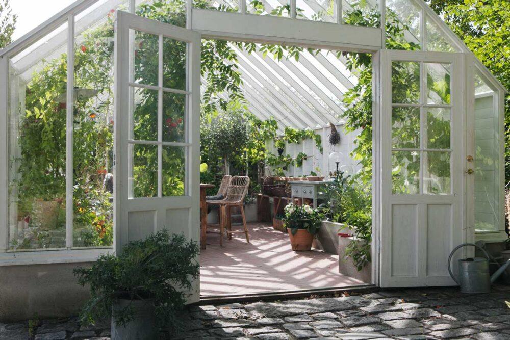 En grön oas i ett växthus